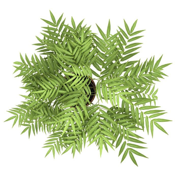 Vinylová Tapeta Pohled shora na dekorativní strom v hrnci na bílém pozadí - Rostliny