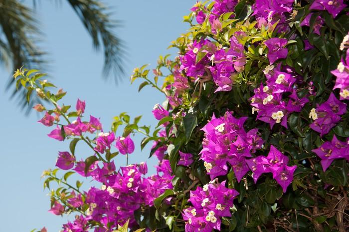 Vinylová Tapeta Kvetoucí popínavé rostliny větev na pozadí oblohy - Květiny