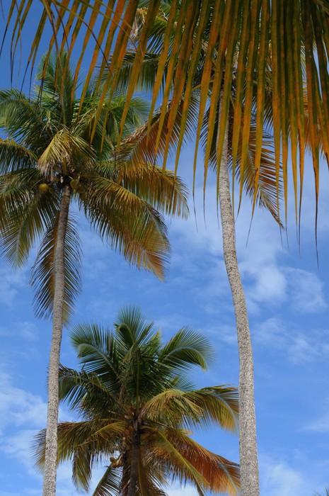 Vinylová Tapeta Francie, Sainte Anne Guadeloupe - Prázdniny