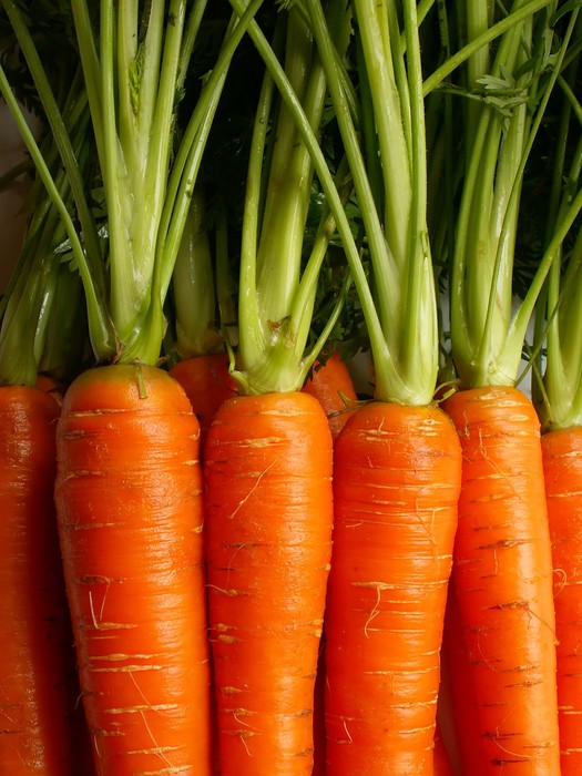 carrots Sticker - Pixerstick - Meals