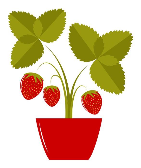 aufkleber erdbeeren im topf pixers wir leben um zu ver ndern. Black Bedroom Furniture Sets. Home Design Ideas