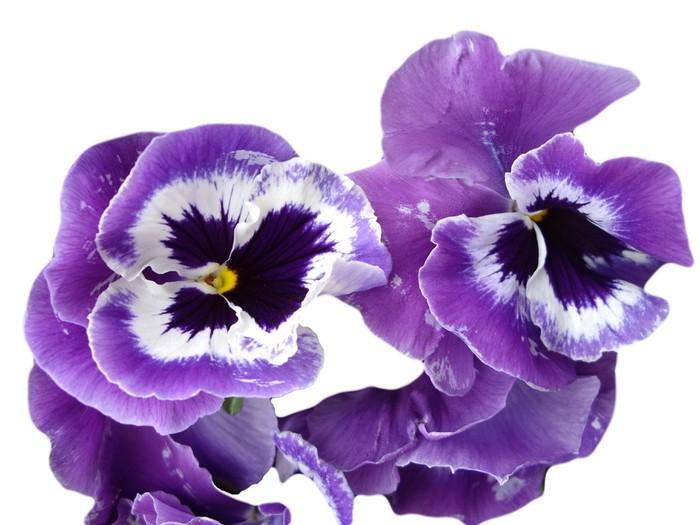 Vinilo pixerstick orqu deas moradas pixers vivimos for Cuidado de las orquideas moradas