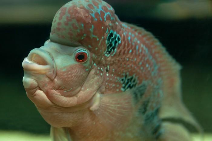 Vinylová Tapeta Tropické ryby - Vodní a mořský život