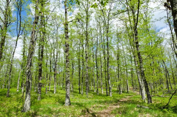 Vinylová Tapeta Společný Oak Forest - Lesy