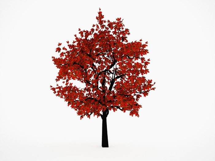 tableau sur toile les arbres avec des feuilles rouges pixers nous vivons pour changer. Black Bedroom Furniture Sets. Home Design Ideas