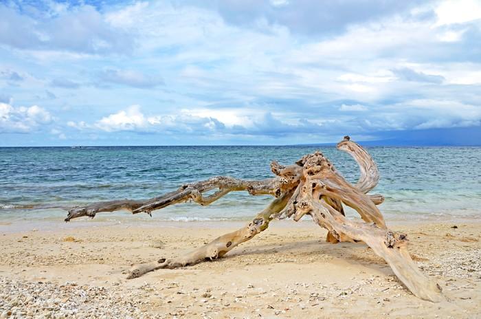 Vinylová Tapeta Vymyje naplavené dříví na písečné pláži - Prázdniny