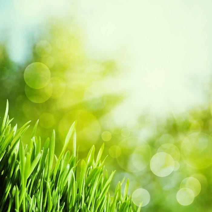Vinylová Tapeta Abstraktní přírodní pozadí s zelené trávy a krása bokeh - Roční období