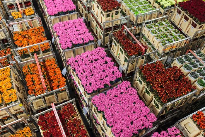 Vinyl Behang Kratten met bloemen en planten op een bloemenveiling - Landbouw