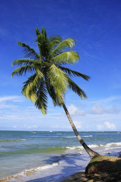 Leaning palm tree at Las Terrenas beach, Samana peninsula Vinyl Wallpaper - America
