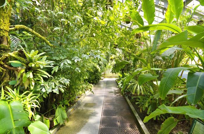 Fototapete Tropische Pflanzen in einem Gewächshaus bei Botanischen ...