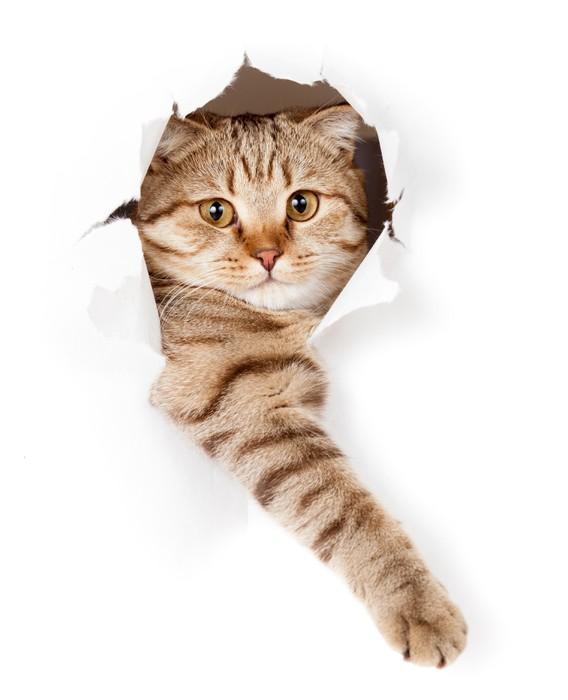 Vinilo pixerstick gato en el agujero blanco papel pintado for Papel vinilo blanco