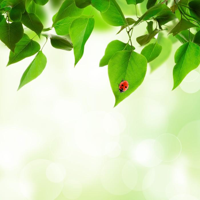 Vinylová Tapeta Krásné listy na pozadí - Stromy