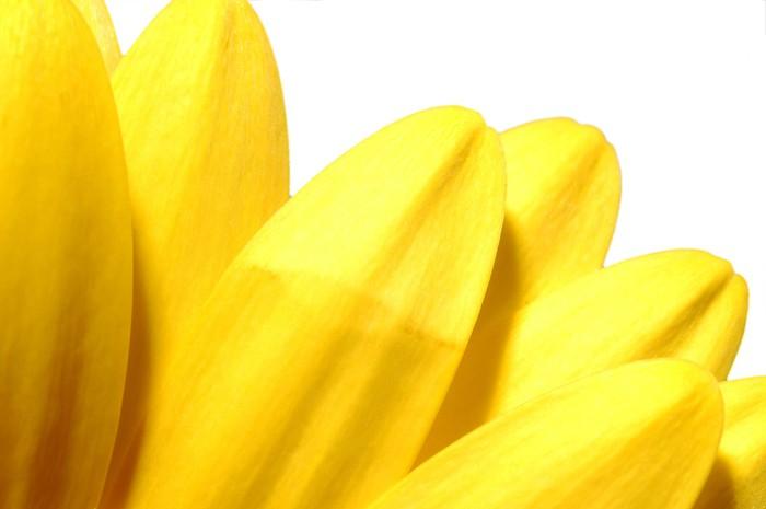 Vinylová Tapeta Žluté květy - Květiny