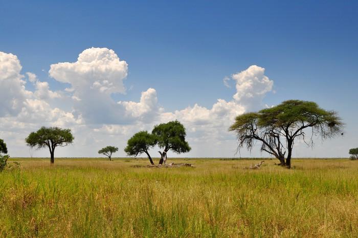 Vinylová Tapeta African krajina - Prázdniny