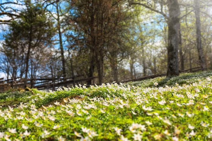 Vinylová Tapeta Lesní na jaře - Roční období