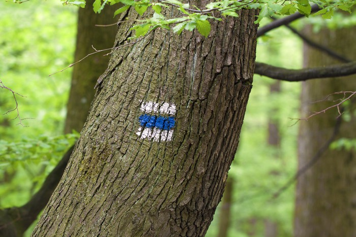 Vinylová Tapeta Značka pro pěší turistiku v lese - Outdoorové sporty