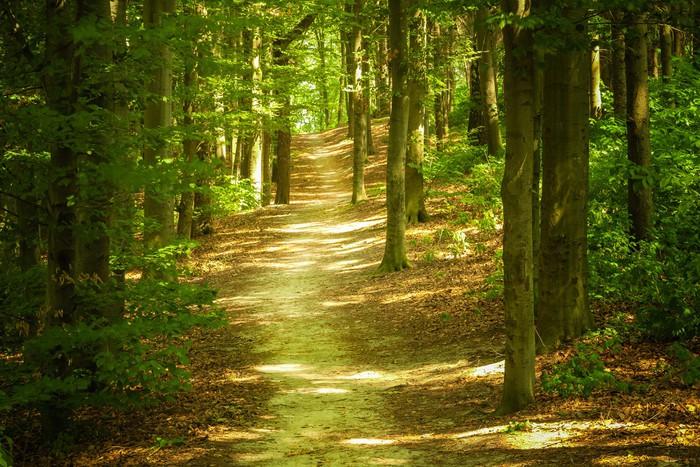 fototapeta leśny krajobraz � pixers174 � Żyjemy by zmienia�