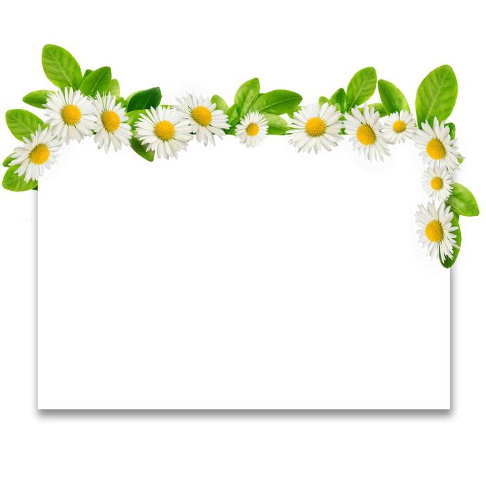 Vinilo Pixerstick Marco: margaritas y hojas verdes • Pixers ...