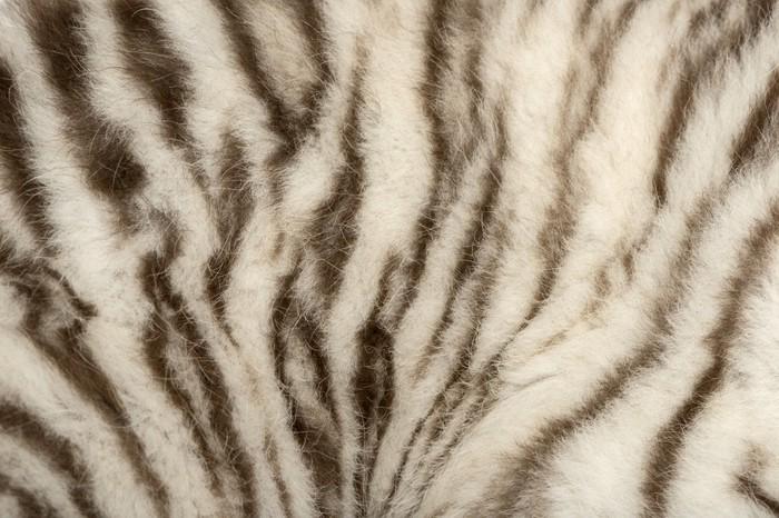 Pixerstick Aufkleber Makro von einem weißen Tiger Fell - Themen
