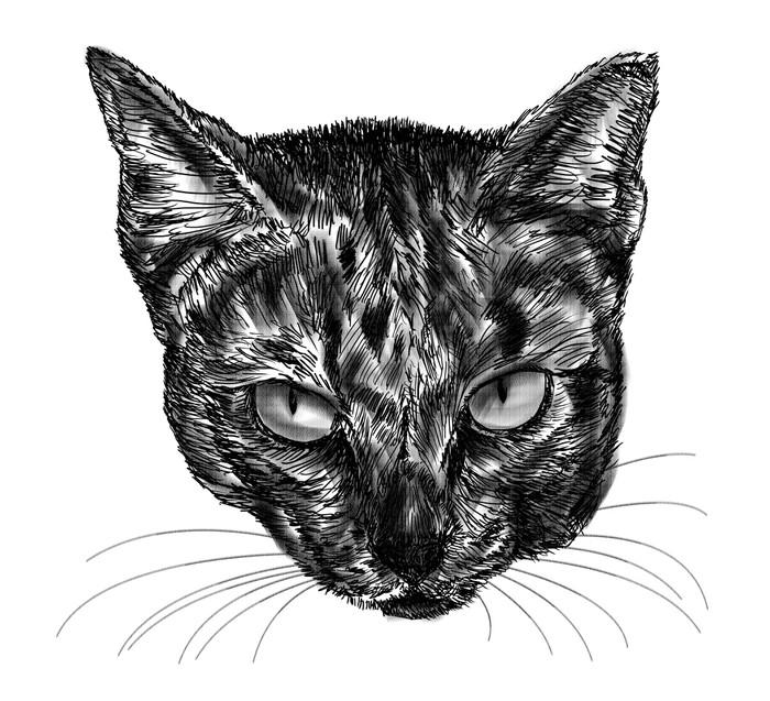 tableau sur toile dessin de chat sur fond blanc pixers nous vivons pour changer. Black Bedroom Furniture Sets. Home Design Ideas