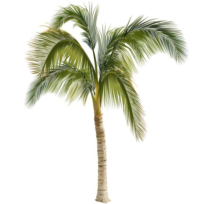 papier peint arbre palmier pixers nous vivons pour changer. Black Bedroom Furniture Sets. Home Design Ideas