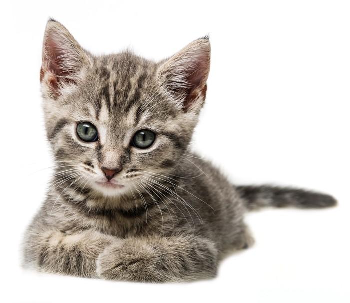 papier peint mignon petit portrait de chaton pixers. Black Bedroom Furniture Sets. Home Design Ideas