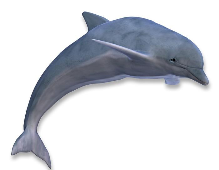 Vinylová Tapeta Ilustrace skákání delfínů - Nálepka na stěny