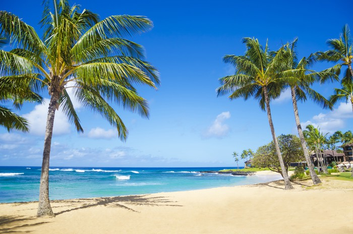 Palm trees on the sandy beach in Hawaii Wall Mural Pixers We