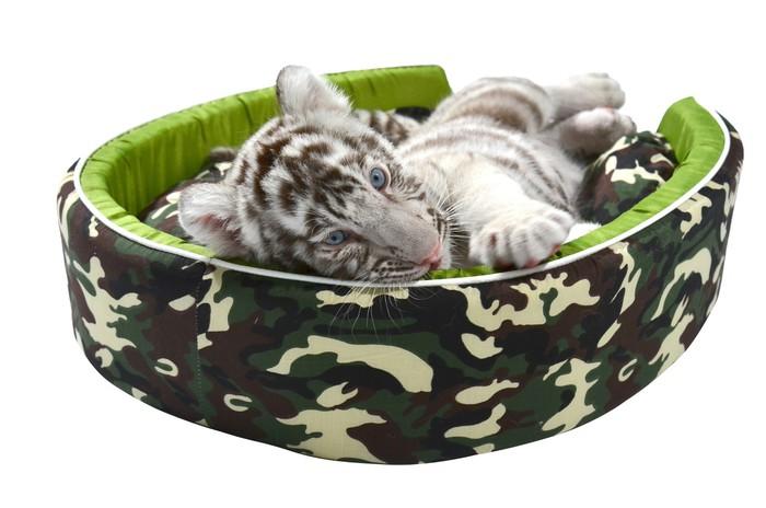 Vinylová Tapeta Dítě bílý tygr, kterým se v matraci izolované - Savci