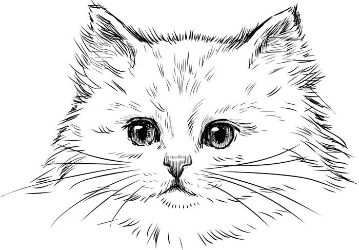 Vinylová Tapeta Bílé kotě - Témata