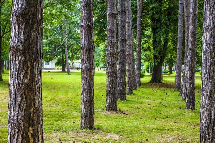 Vinylová Tapeta Linie stromů - Stromy