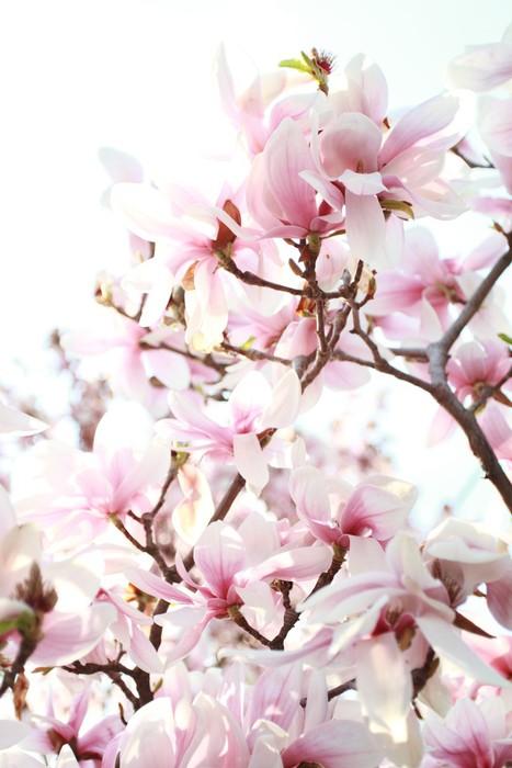 tableau sur toile magnolia pixers nous vivons pour changer. Black Bedroom Furniture Sets. Home Design Ideas