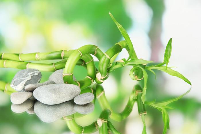 Vinylová Tapeta Zátiší se zeleným bambusové rostliny a kameny, - Jiné objekty