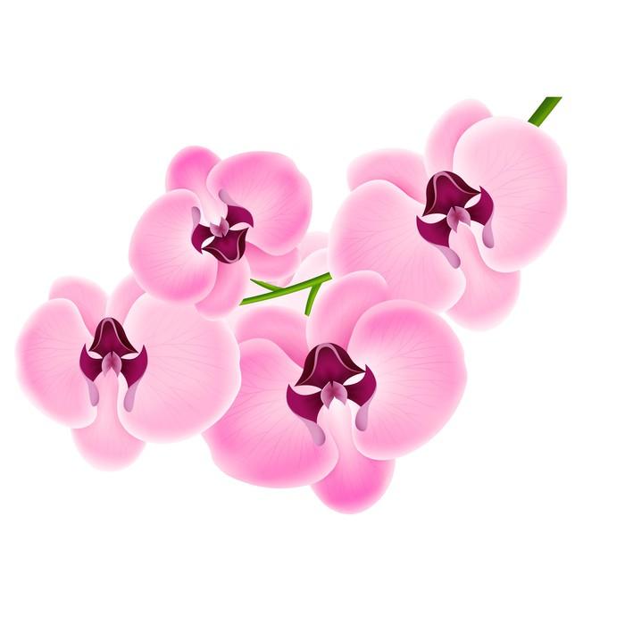 Vinylová Tapeta Orchidej na bílém pozadí - Nálepka na stěny