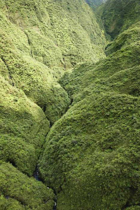 Vinylová Tapeta Maui Rainforest. - Venkov