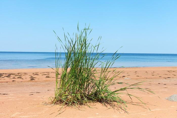 Vinylová Tapeta Tráva na pláži. - Evropa