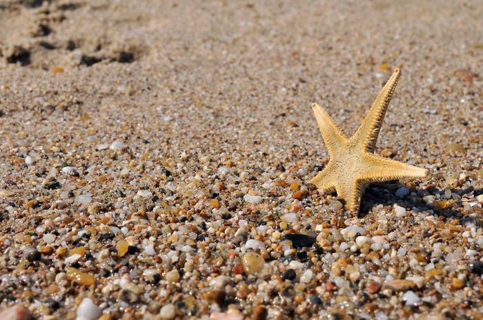 Vinylová Tapeta Shell v moři - Prázdniny