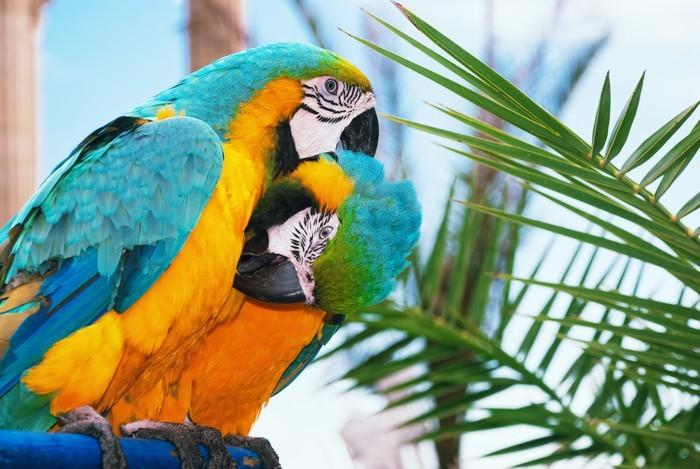 Vinylová fototapeta Modrá a žlutá papoušek - Vinylová fototapeta