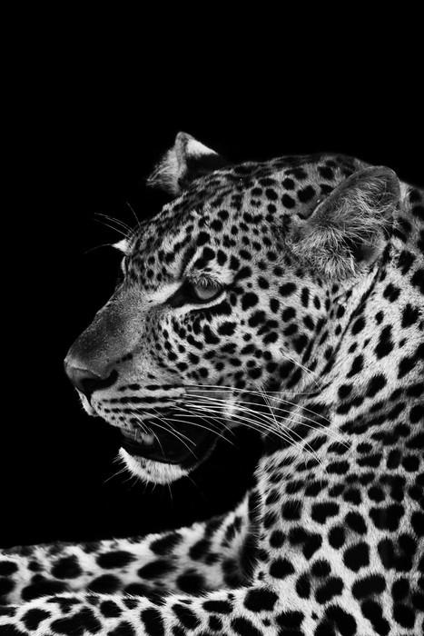 Vinyltapete Leopard - Afrika