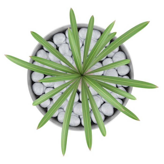 Top View Of Cactus Plant In Pot Isolated On White Background Vinyl Wall Mural
