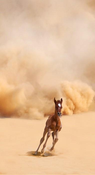 Vinylová Tapeta Arabské hříbě běží ven z bouře Desert - Pouště
