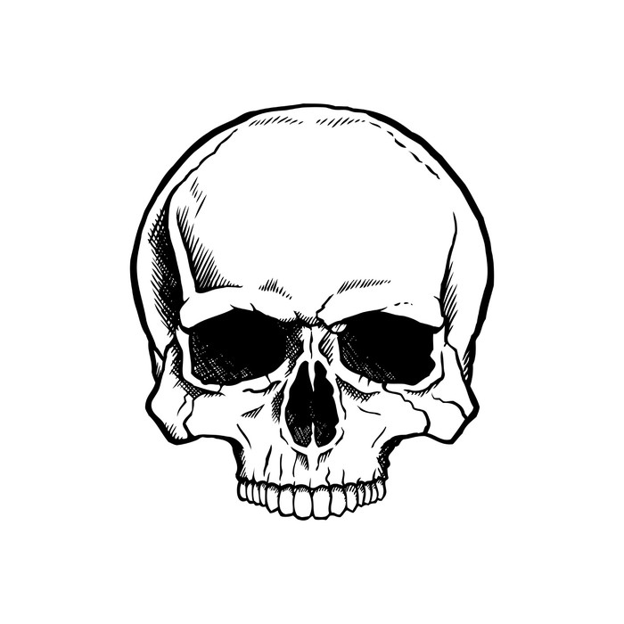 Vinilo Pixerstick Blanco y negro cráneo humano sin mandíbula ...