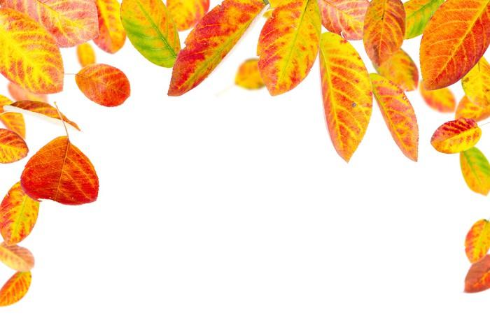 Vinylová Tapeta Barevné podzimní listí na bílém pozadí - Roční období