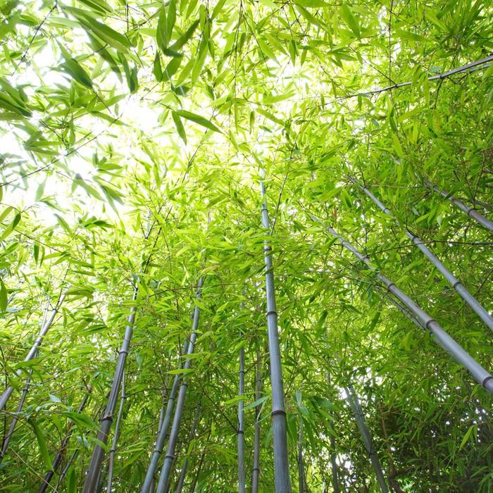 Vinylová Tapeta Bambusový les - Domov a zahrada