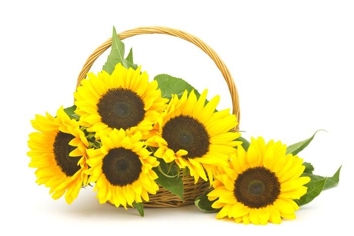 Vinylová Tapeta Krásné slunečnice kytice v koši (Helianthus) - Květiny