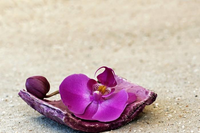 Vinylová Tapeta Orchidej květina - Květiny