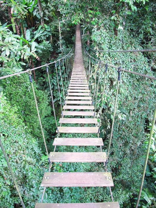 Sticker pont de corde sur l 39 arbre de haute futaie chiang for Haute futaie