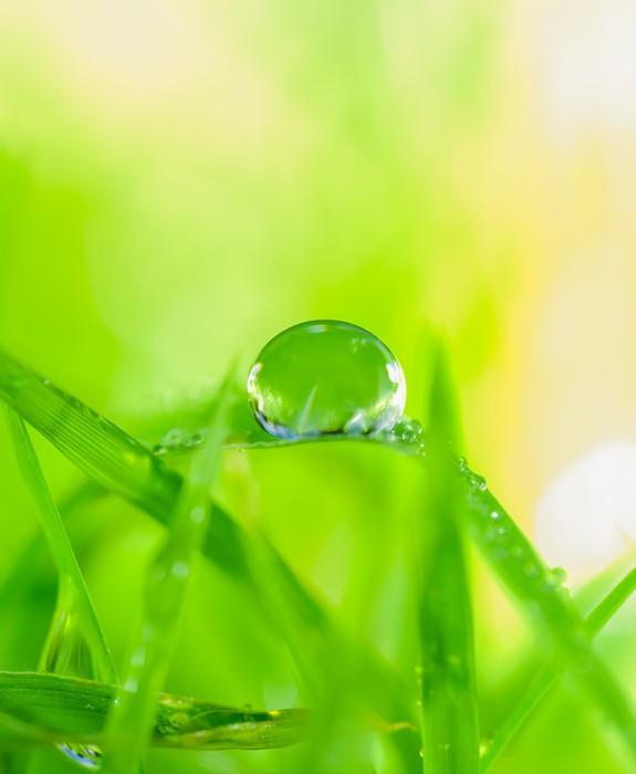 Vinylová Tapeta Rosa na trávě - Zdraví a medicína