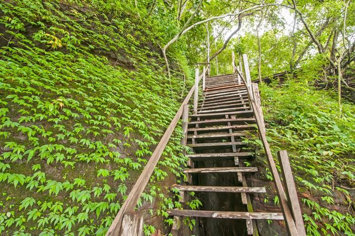 Vinylová Tapeta Schodiště v džungli - Příroda a divočina