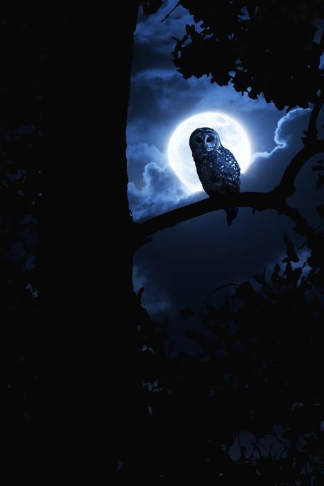 Vinylová Tapeta Owl Hodinky pozorně osvětlena úplňku na Halloween - Témata